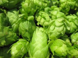 เบียร์ ต้มเบียร์ ทำเบียร์ ถังน้ำดื่ม ถังใส food grade
