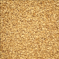 Castle Malting® Wheat Malt