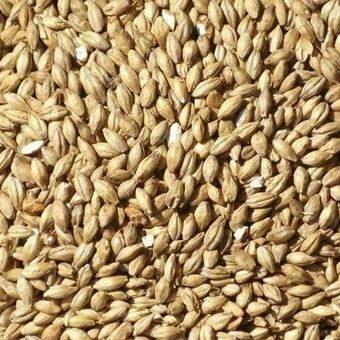 Thomas Fawcett – Spring Barley Pale Ale Malt
